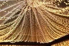 Guirnalda bombillas